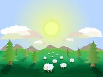 绵羊在草甸 免版税库存照片