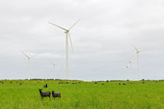 绵羊在绿色牧场地和与风轮机 免版税库存图片