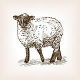 绵羊手拉的剪影传染媒介 免版税图库摄影