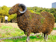 绵羊植物的雕塑 库存图片