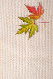 羊毛构造与秋叶 免版税库存图片