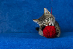 羊毛球的猫 库存照片