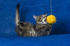 羊毛球的猫 免版税库存图片