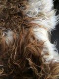 绵羊毛皮 库存图片