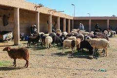 羊毛绵羊待售 库存图片