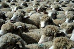 羊毛7 免版税库存照片