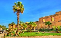 绵羊牧群在Azemmour城市墙壁的在摩洛哥 免版税库存图片
