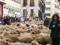 绵羊的假日在马德里 图库摄影