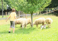 绵羊的牧民 免版税图库摄影