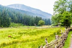 绵羊的绿色牧场地高在山 免版税库存照片