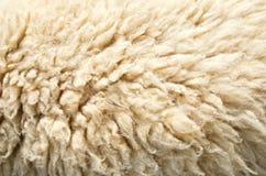 绵羊羊毛皮肤 免版税库存照片