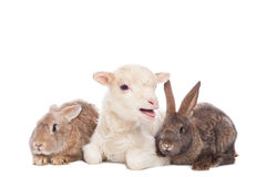 羊羔和兔子 免版税图库摄影