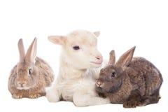 羊羔和兔子 免版税库存图片
