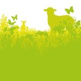 羊羔在草甸 皇族释放例证