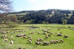 羊羔山 库存图片