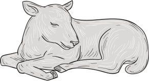 羊羔睡觉图画 皇族释放例证