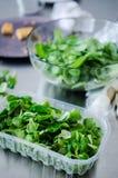 羊羔lettucein塑料盒 库存照片