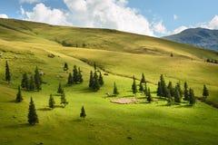 绵羊群在高山牧场地的 库存照片