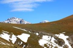 绵羊群在Gran Sasso停放,亚平宁山脉,意大利 免版税库存图片