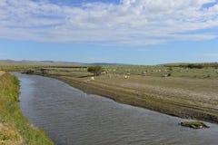 绵羊群由Mergel河沿的在Hulun Buir草原 库存照片