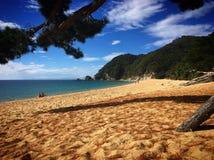 羊肉小海湾,新西兰 免版税库存图片