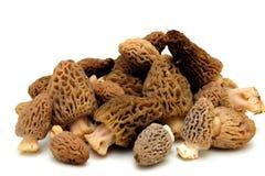 羊肚菌蘑菇 库存照片