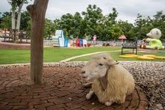 绵羊触击一个偶然姿势 免版税图库摄影
