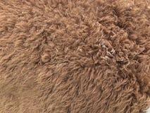 羊魄头发 免版税库存照片