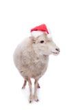 绵羊画象在圣诞节帽子的在白色 免版税库存图片