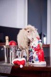 绵羊画象在圣诞节帽子的在白色 库存图片