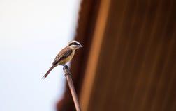 美丽一只小的鸟 图库摄影