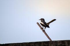 美丽一只小的鸟 免版税库存照片