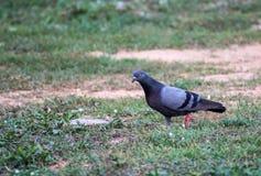 美丽一只小的鸟 库存照片
