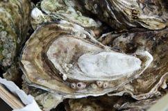 美丽一只美味的牡蛎 免版税库存照片