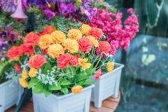 美丽假白色和桃红色为装饰,有选择性的focu上升了 免版税库存图片