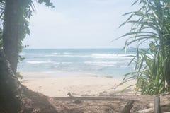 美丽加勒比哥斯达黎加海洋水海滩天堂假期树的雨林 免版税库存照片