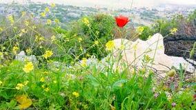 美丽北部的以色列 库存图片