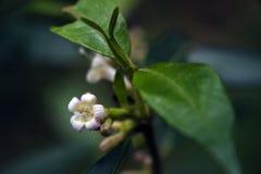 美丽和侈奢的微白花 库存照片
