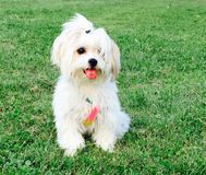 美丽和可爱的小狗 免版税库存图片