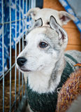 美丽和孤立的小狗 库存照片