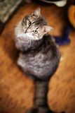 美丽和快乐的猫 免版税库存照片