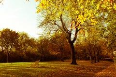 美丽和明亮的秋季树在有下午阳光的苏格兰公园 免版税库存照片