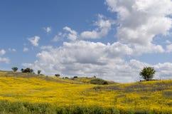 美丽和用花装饰的草甸 库存图片