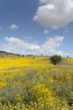 美丽和用花装饰的黄色草甸 免版税图库摄影