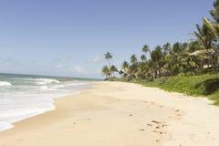 美丽和被保存的Coqueirinhos海滩 免版税库存图片