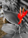 美丽和装饰红色花厂 免版税库存照片