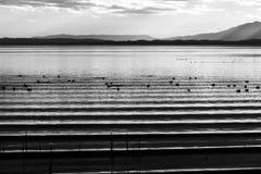 美丽和锋利的水在Trasimeno湖翁布里亚,日落的意大利起波纹,与鸭子和遥远的小山 图库摄影