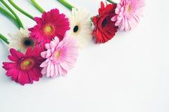 美丽和颜色花进入开花 免版税库存照片