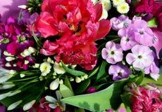 美丽和颜色花进入开花 免版税库存图片