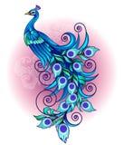 美丽和高雅蓝色孔雀 库存照片